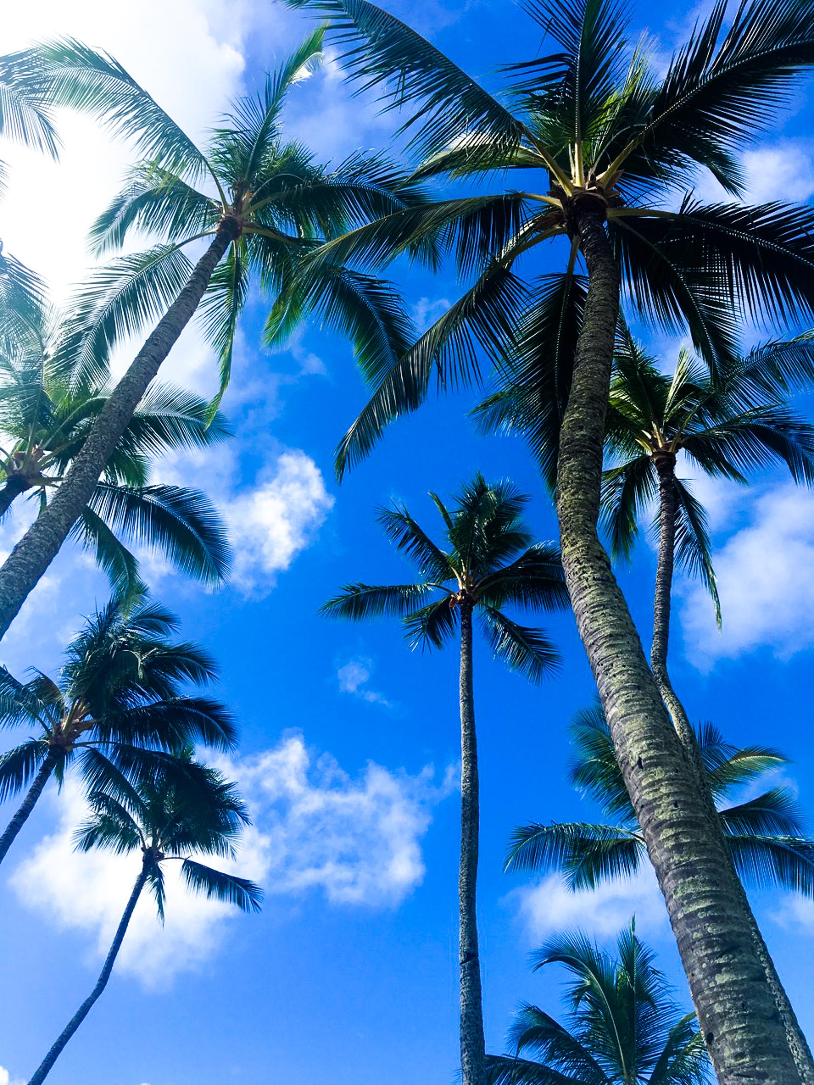 HawaiiPhone-14