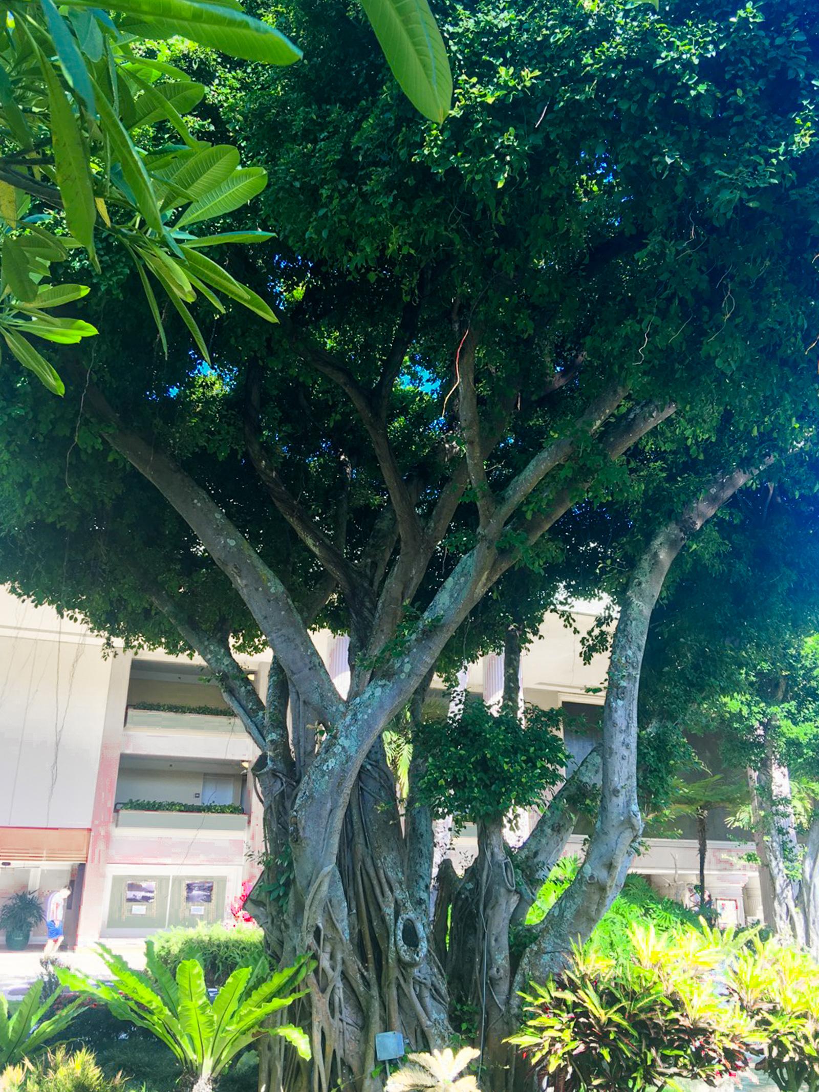 HawaiiPhone-27